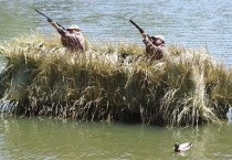 Duck and Goose Blinds and Blind Accessories