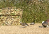Turkey Blinds and Stands
